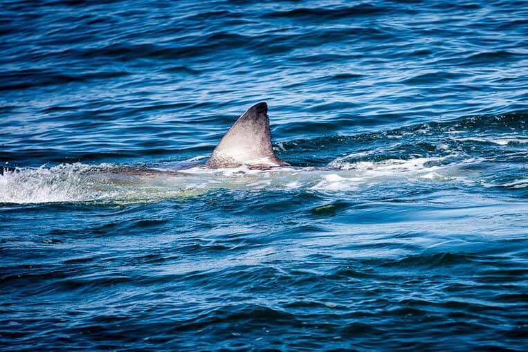 TOP 10: Les attaques de requins dans le monde