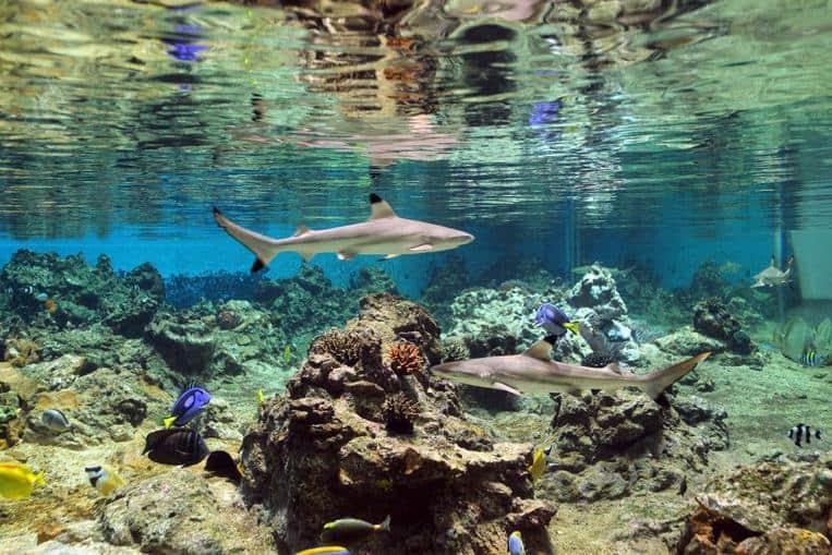 Ils protègent les récifs coralliens et les herbiers marins