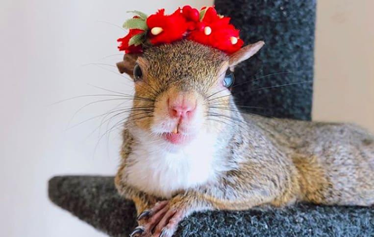 Jill l'écureuil adore la mode et pose pour la caméra