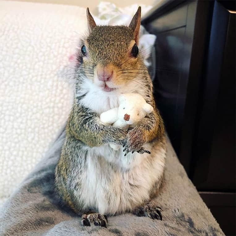 Jill l'écureuil et son ours en peluche