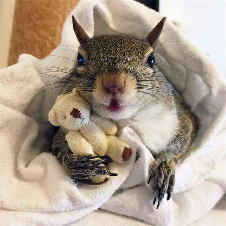 Jill l'écureuil ne quitte plus son ours en peluche