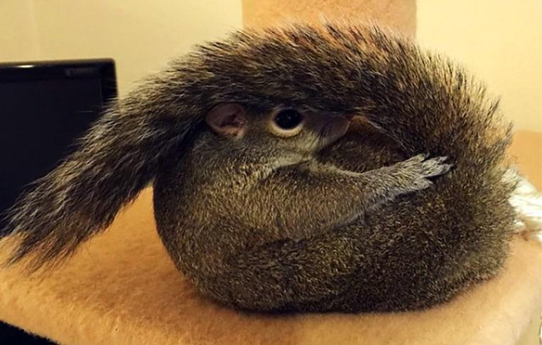 Jill l'écureuil aime faire des pitreries pour le plus grand bonheur de ses abonnés Instagram