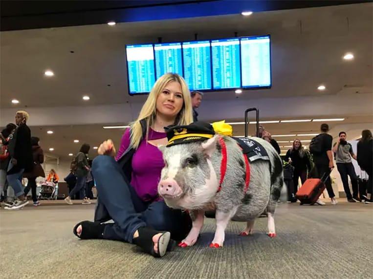 Lilou le cochon soulage les passagers stressés dans l'aéroport de San Francisco