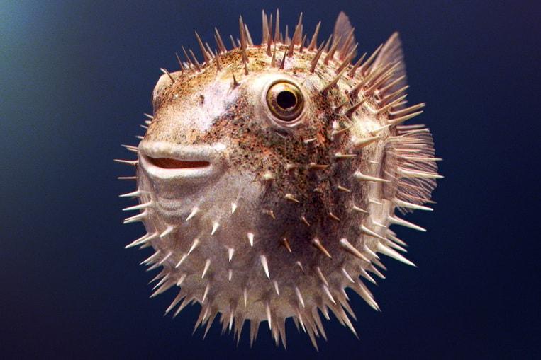 TOP 10: Les poissons les plus dangereux du monde