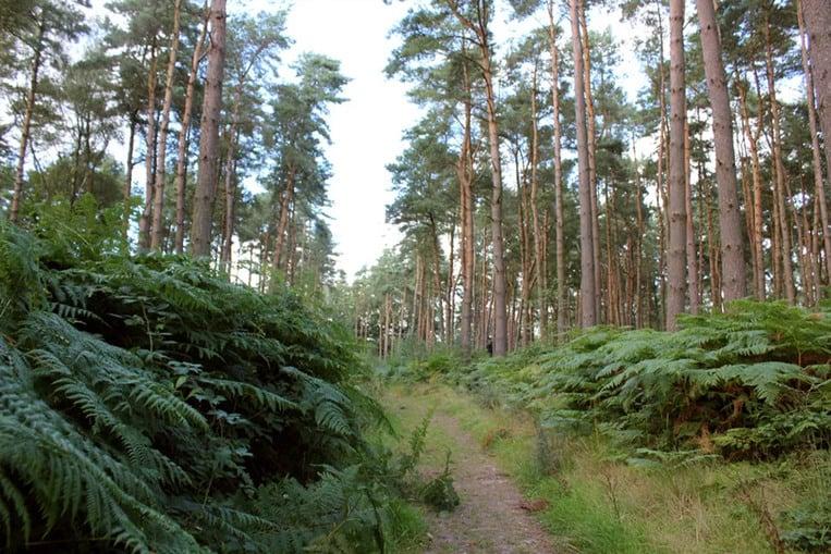 Wychwood Forest, England