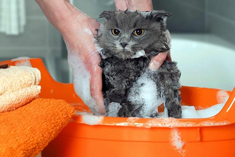 Peut-on laver un chat avec du shampoing pour humain ?