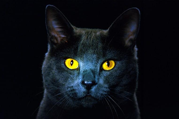 Les chats voient-ils dans le noir complet ?