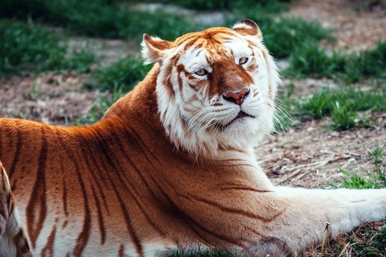 TOP 10: Les animaux les plus rares au monde